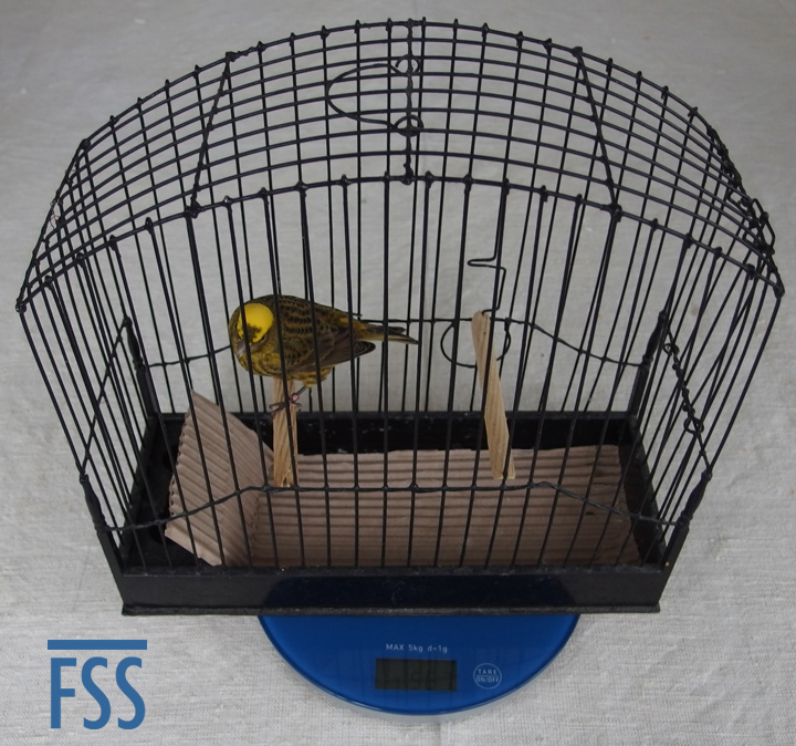 Scales+cage+bird-FSS
