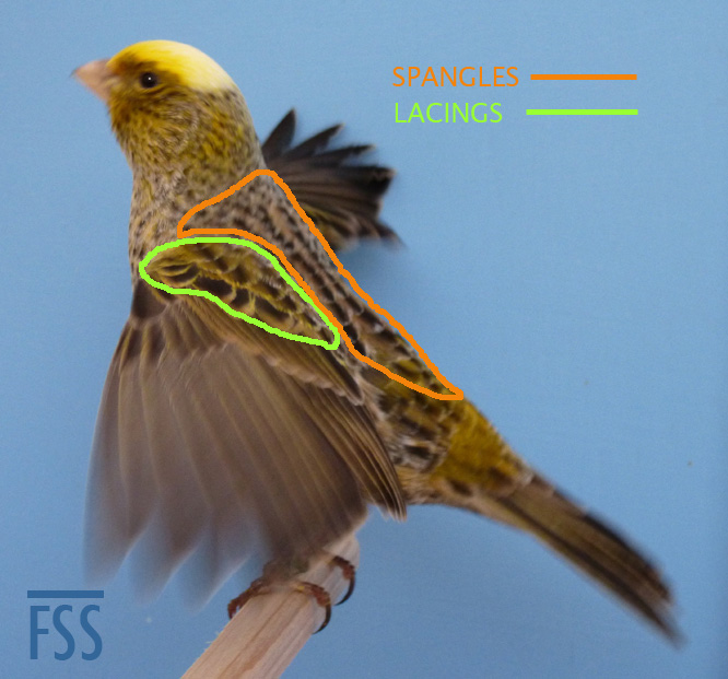 CCSH wings-markup-fss
