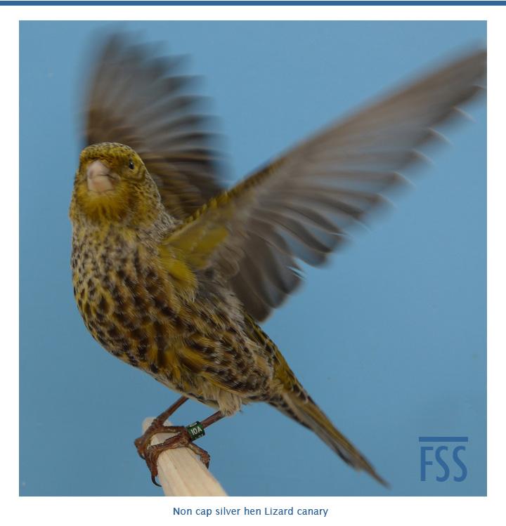 BCSH 2014-040e wings raised-FI