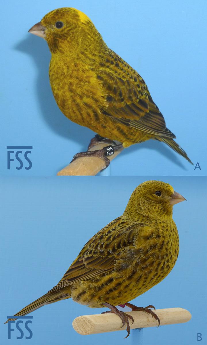 BCG-MorF2-fss