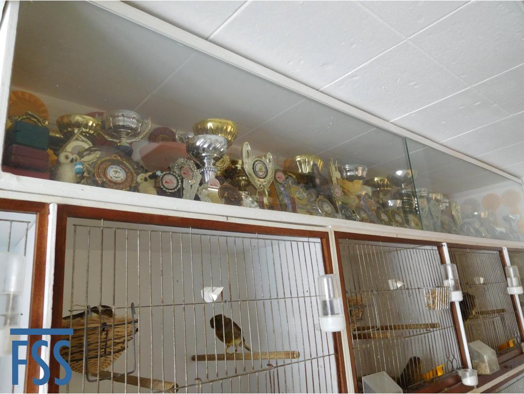 Manolo trophies-fss