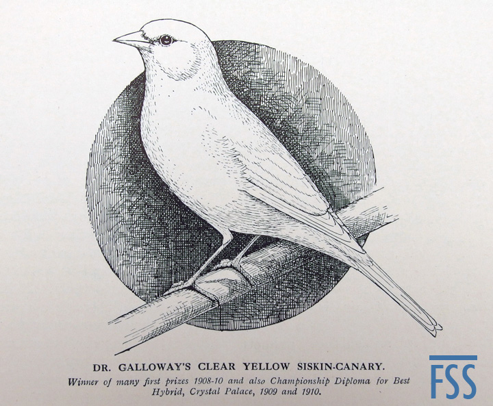 Galloway clear siskin mule-fss