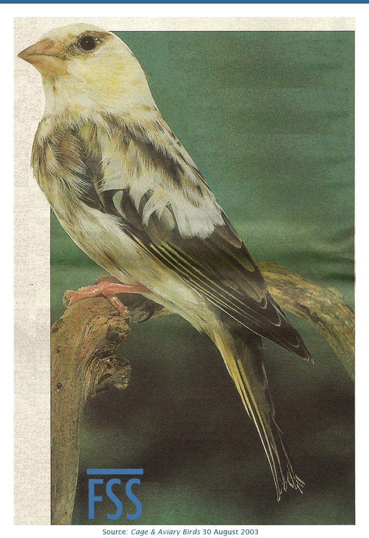 Pied greenfinch cum LF C&AB 30.08.03-FI