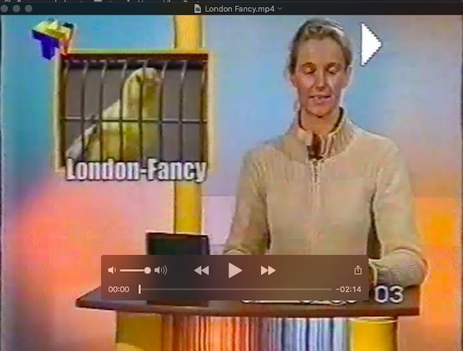 LF on TV