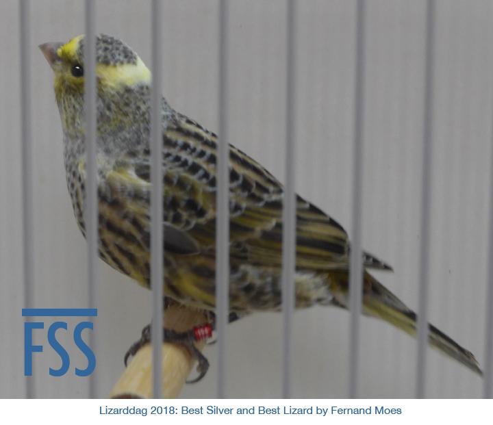 Liarddag 2018 Best Lizard FMoes-FSS