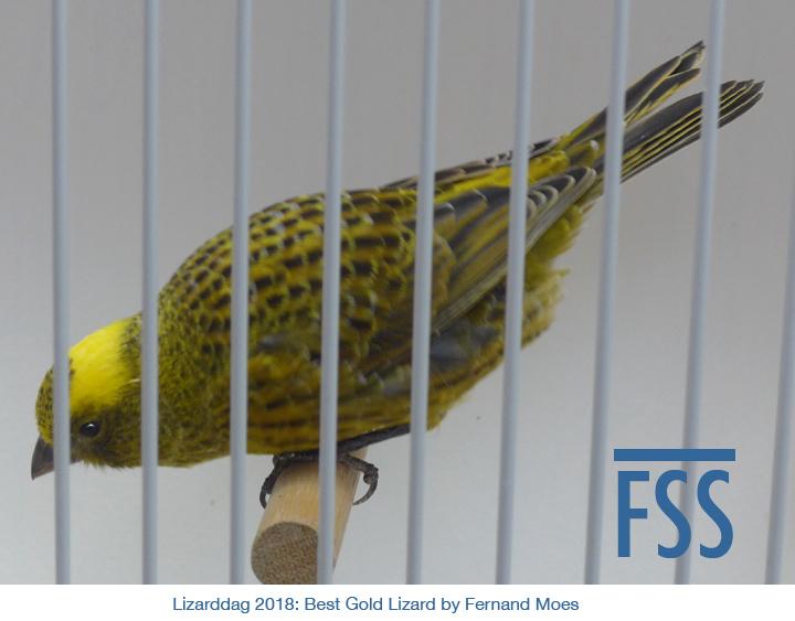 Lizarddag 2018 Best Gold 2 FMoes-FSS