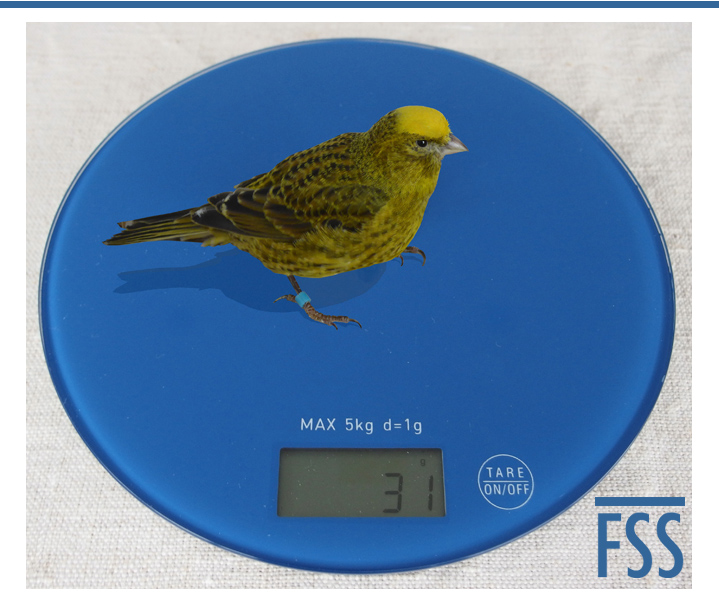Canary scales-FI