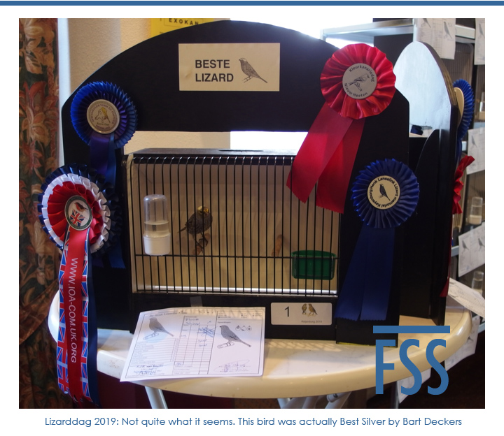 Lizarddag 2019 Best Silver in Show-FI