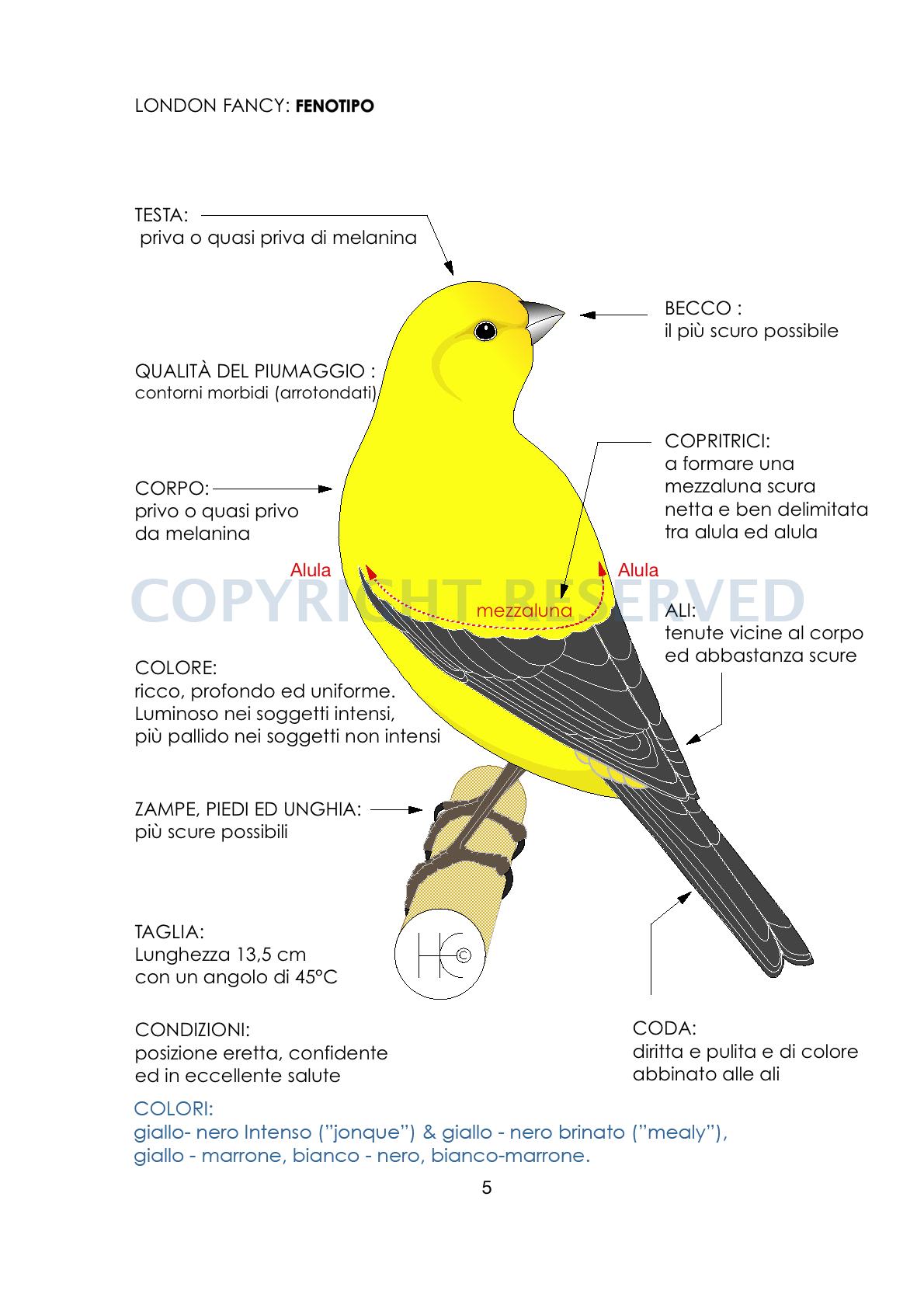 LF standard-phenotype ITALIAN