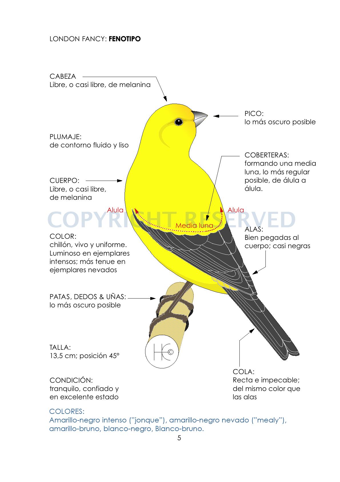 LF standard-phenotype SPANISH
