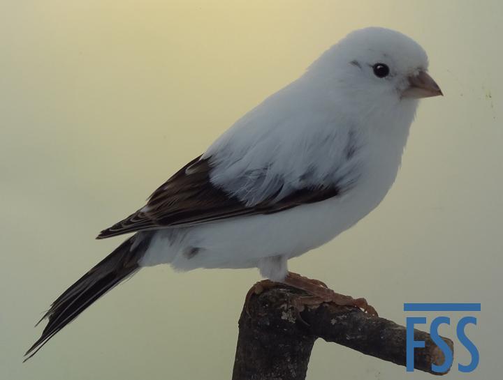 LF white (PRenders)-FSS