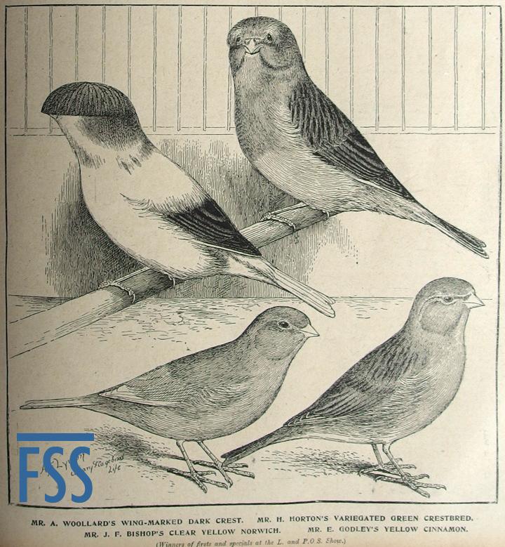 C&CBL 1907.04.05 Norwich & Crests-FSS