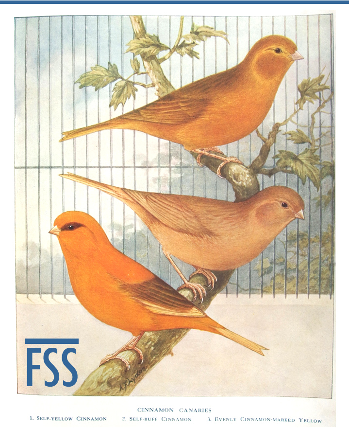 Cinnamon canaries Robson 1912-FI