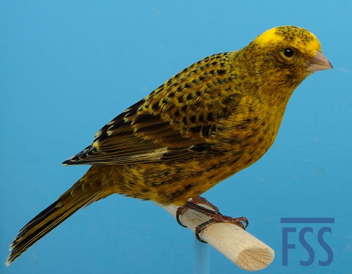 LF 1850 OY wing bar-FSS