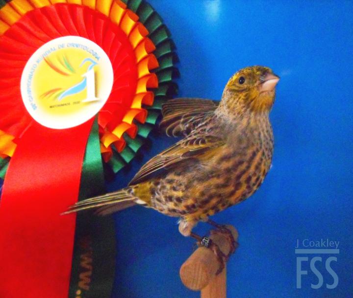 Vincent gold medal stam Portugal-FSS
