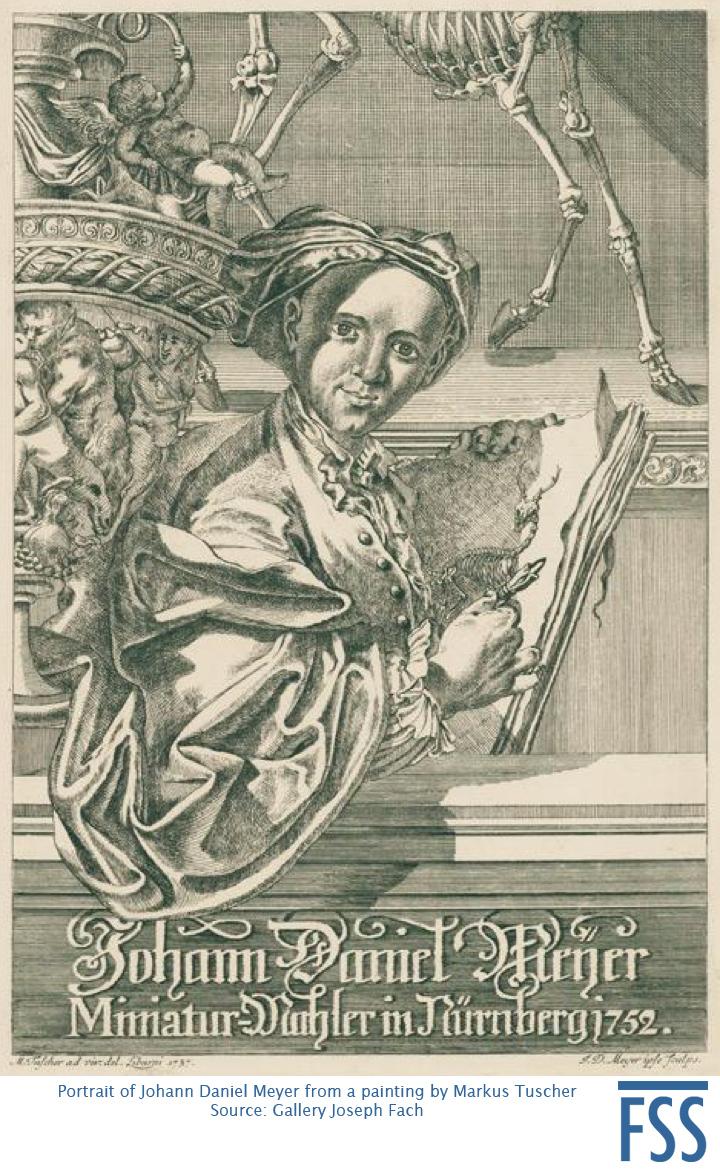 Nuremberg Lizard Meyer-FSS
