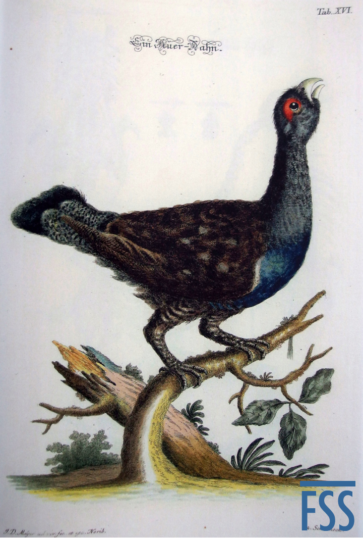 Nuremberg Lizard capercaillie-FSS
