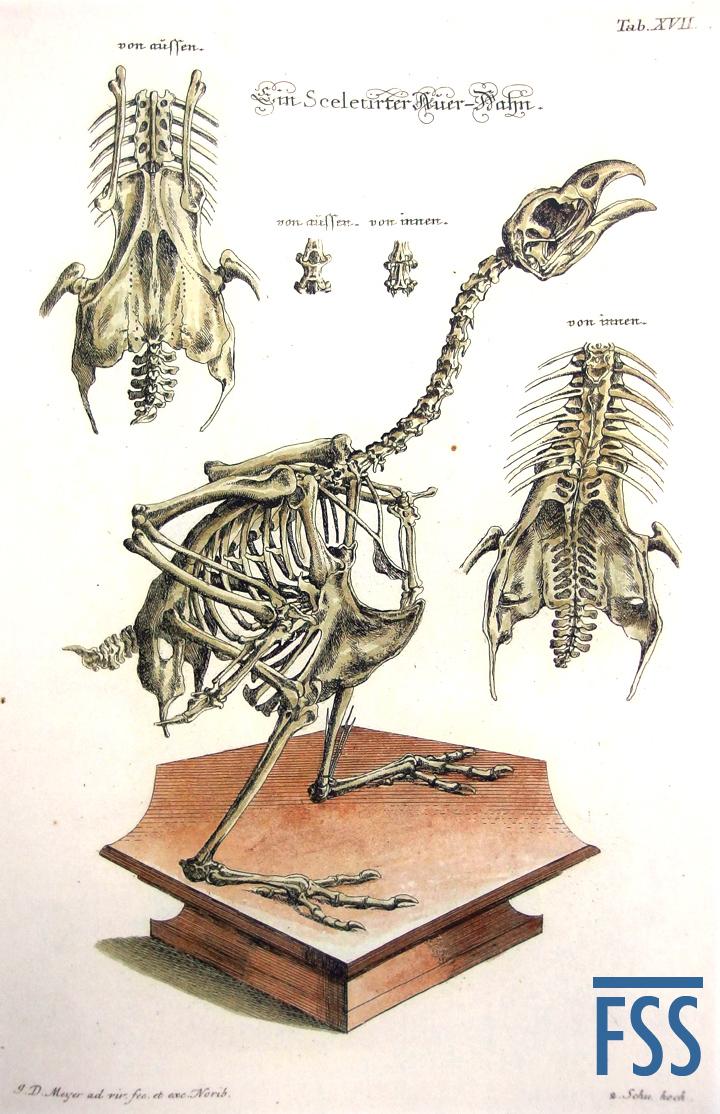 Nuremberg Lizard capercaillie