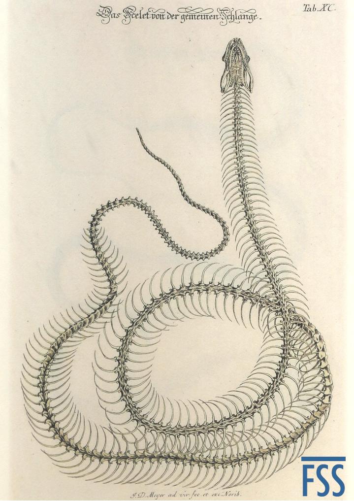 Nuremberg Lizard grass snake-FSS
