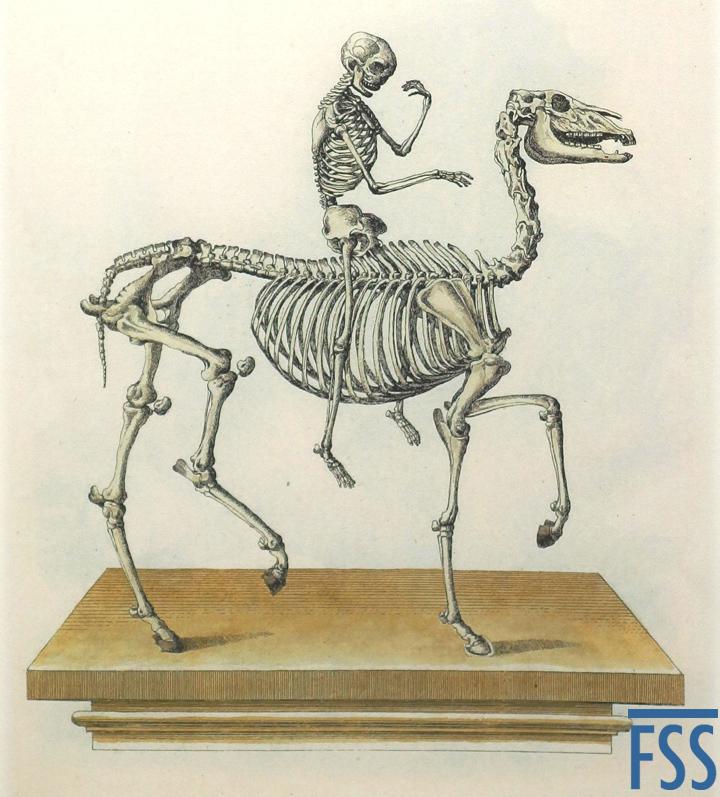 Nuremberg Lizard horseman-FSS