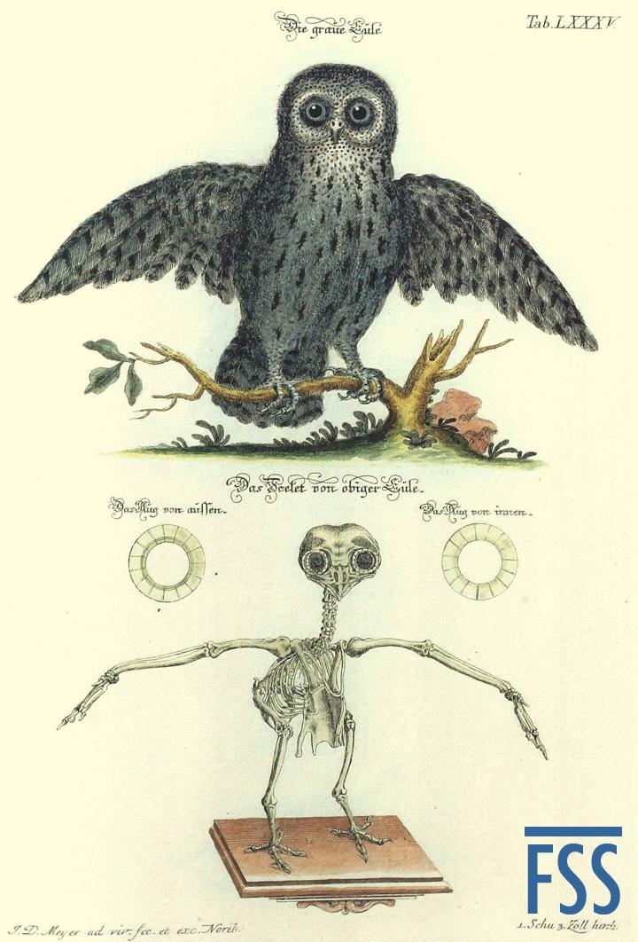 Nuremberg Lizard tawny owl-FSS